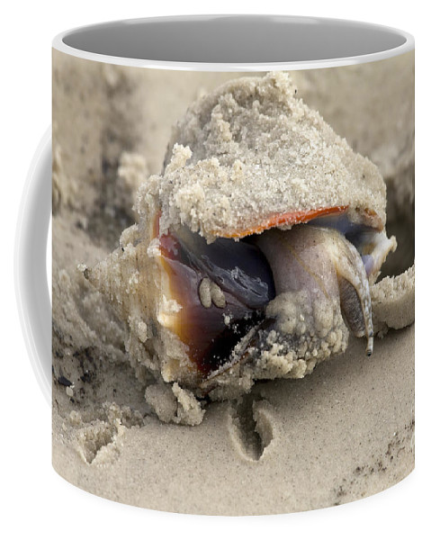 Fighting Conch Coffee Mug featuring the photograph Florida Fighting Conch by Meg Rousher