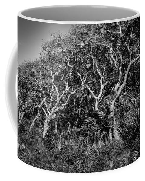 Washington Oaks Gardens State Park Coffee Mug featuring the photograph Florida Scrub Oaks Painted Bw by Rich Franco