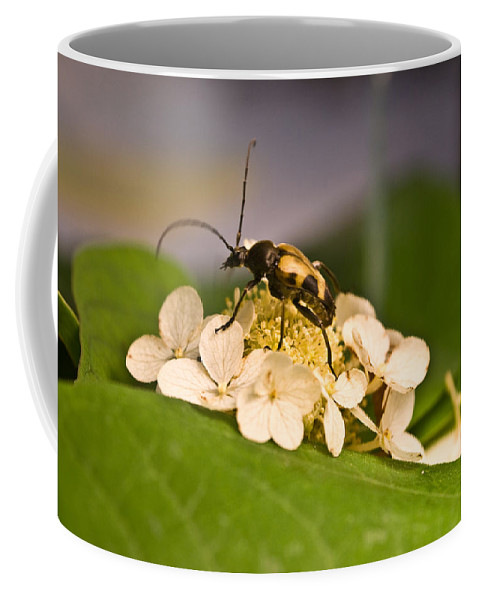 Flower Coffee Mug featuring the photograph Flower Beetle by Douglas Barnett