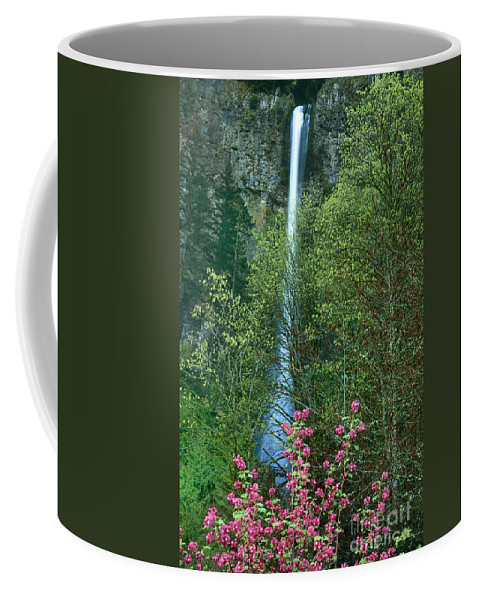 North America Coffee Mug featuring the photograph Flowering Tree Below Multnomah Falls Columbia River Gorge Nsa Oregon by Dave Welling