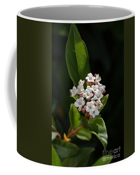 Flower Coffee Mug featuring the photograph Flowers-tiny White by Joy Watson