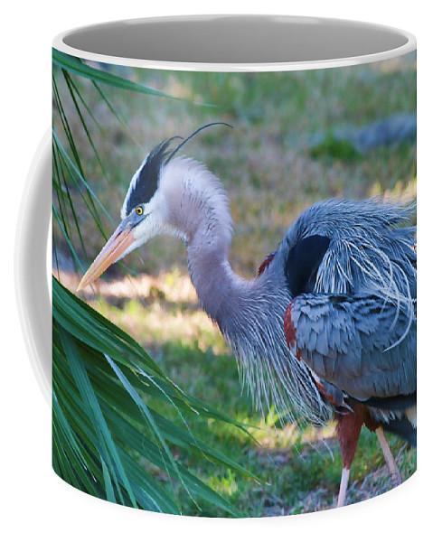 Heron Coffee Mug featuring the photograph Fluff Mode by Deborah Benoit