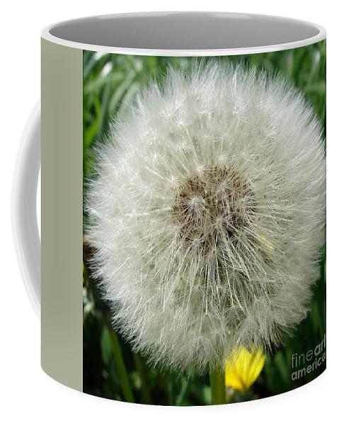 Fluffy Coffee Mug featuring the photograph Fluffy by Carol Lynch
