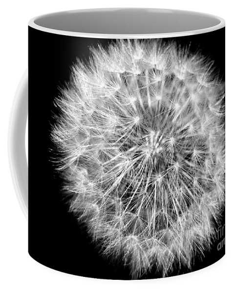 Dandelion Coffee Mug featuring the photograph Fluffy Dandelion On Black by Nina Ficur Feenan