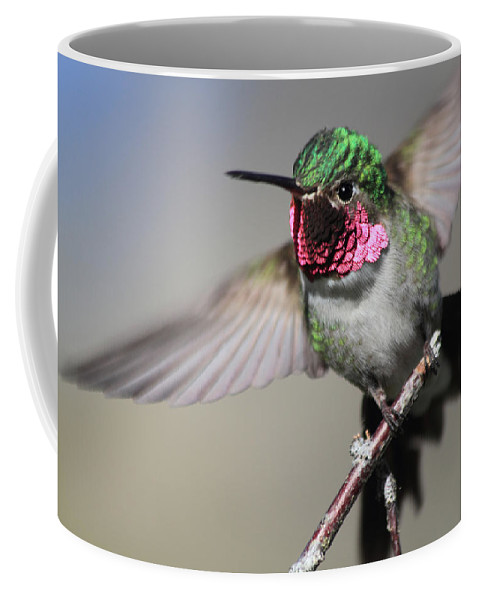 Ruby Throated Hummingbird Coffee Mug featuring the photograph Fluttering by Shane Bechler