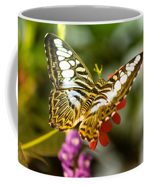 Butterfly Coffee Mug featuring the photograph Fluttering by Jonah Anderson