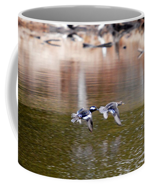 Hooded Merganser Coffee Mug featuring the photograph Flyers by Thomas Phillips