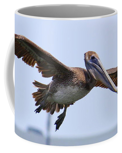Pelican In Flight Coffee Mug featuring the photograph Flying Pelican Panorama by Carol Groenen