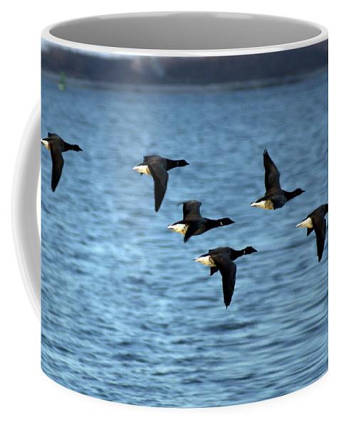 Bird Coffee Mug featuring the photograph Flyway by Joe Geraci