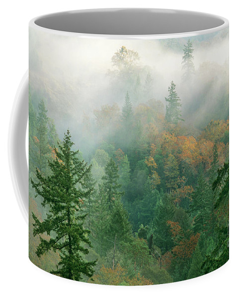 North America Coffee Mug featuring the photograph Foggy Morning In Humbolt County California by Dave Welling