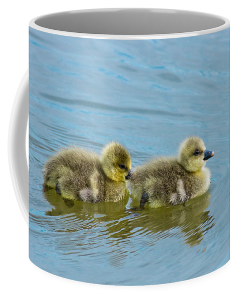 Duckling Baby Geese Bird Gosling Water Coffee Mug featuring the photograph Follow Me by Scott Carruthers