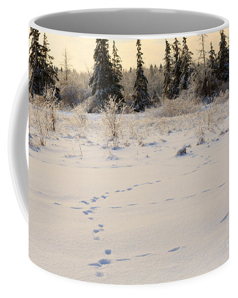 Footprints Coffee Mug featuring the photograph Footprints In Fresh Snow by Louise Heusinkveld