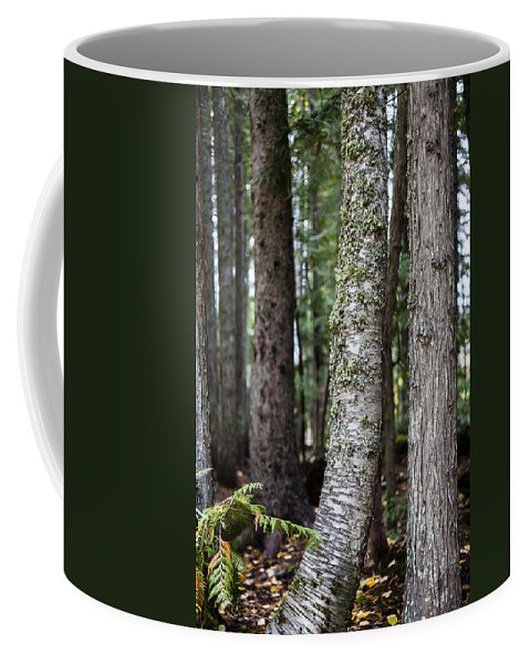 Tree Coffee Mug featuring the photograph Forest Friends by Fran Riley