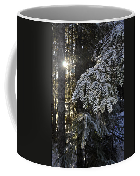 Sun Coffee Mug featuring the photograph Forest In Winter by Cathy Mahnke