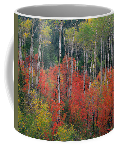 Aspen Forest Coffee Mug featuring the photograph Forest Of Color by Leland D Howard
