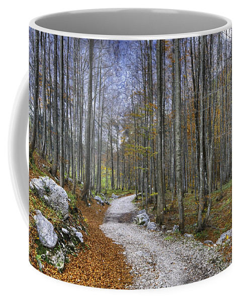 Autumn Coffee Mug featuring the photograph Forest Path by Ivan Slosar