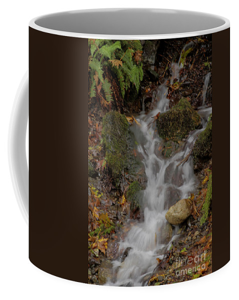 Landscape Coffee Mug featuring the photograph Forest Stream Cascade by Darleen Stry