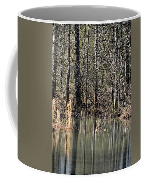 Forest Stream Coffee Mug featuring the photograph Forest Stream by Maria Urso