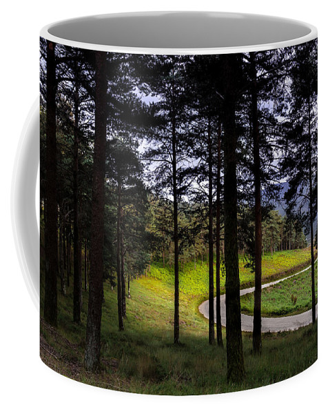 Mountain Coffee Mug featuring the photograph Forest Trail by Edgar Laureano