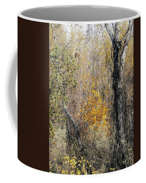 Trees Coffee Mug featuring the photograph Forest Trees In Winter by Pamela Patch