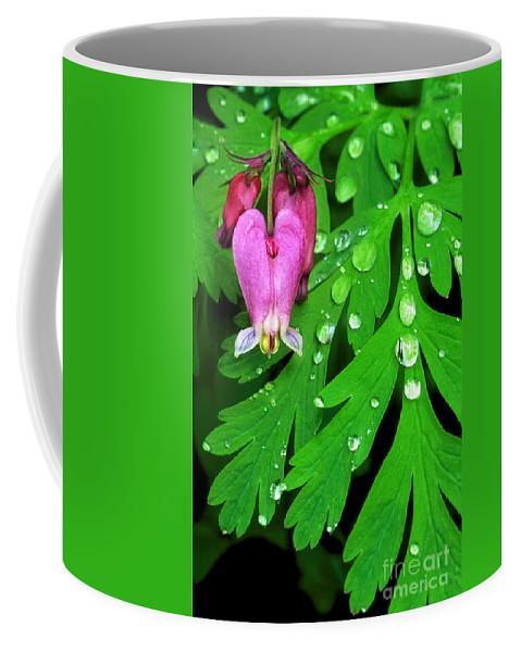 Formosa Bleeding Heart Coffee Mug featuring the photograph Formosa Bleeding Heart On Ferns by Dave Welling