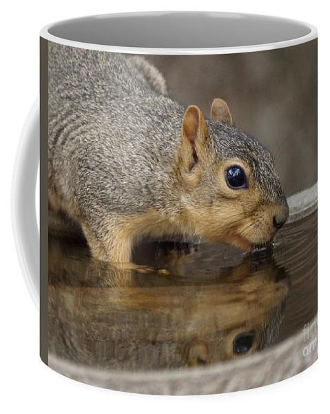 Squirrel Coffee Mug featuring the photograph Fox Squirrel by Lori Tordsen