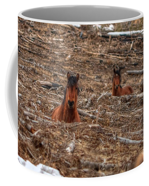 Wild Horse Coffee Mug featuring the photograph Foxhole Mustangs by James Anderson