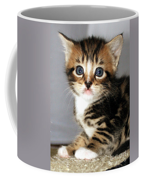 Kitten Coffee Mug featuring the photograph Foxy The Kittens Big Eyes by Terri Waters