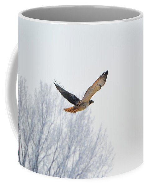 Red Tail Hawk Coffee Mug featuring the photograph Freebird 2 by Bonfire Photography