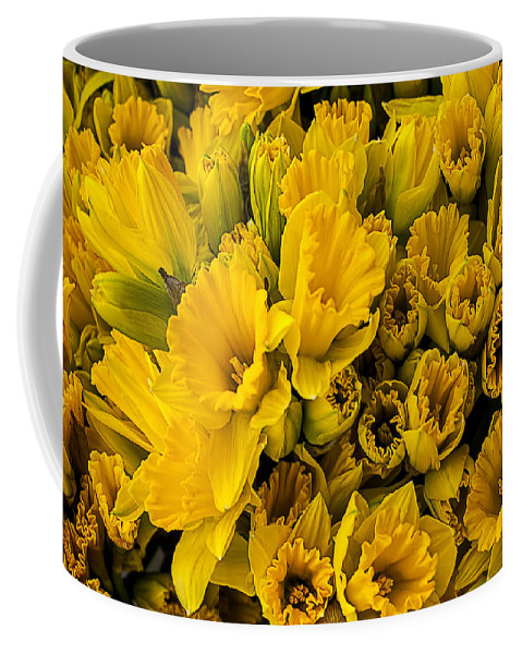 Fresh Yellow Coffee Mug featuring the photograph Fresh Daffodils by Garry Gay
