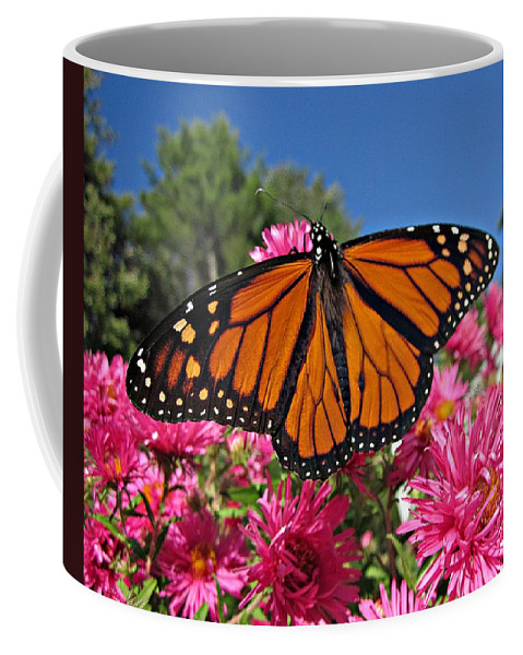 Monarchs Coffee Mug featuring the photograph Fresh Monarch Butterfly by MTBobbins Photography