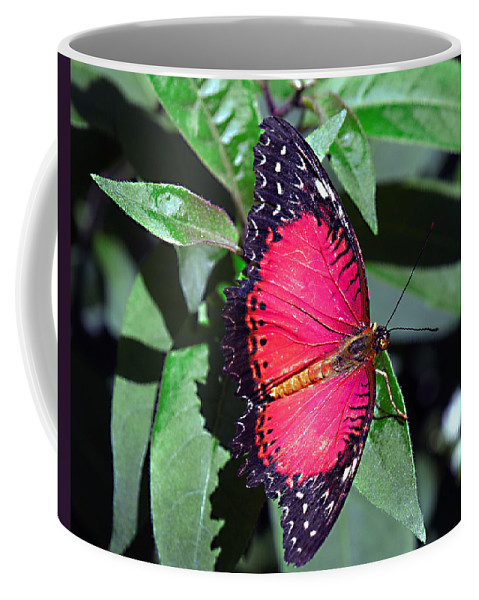 Butterfly Coffee Mug featuring the photograph Fringed by Bob Johnson