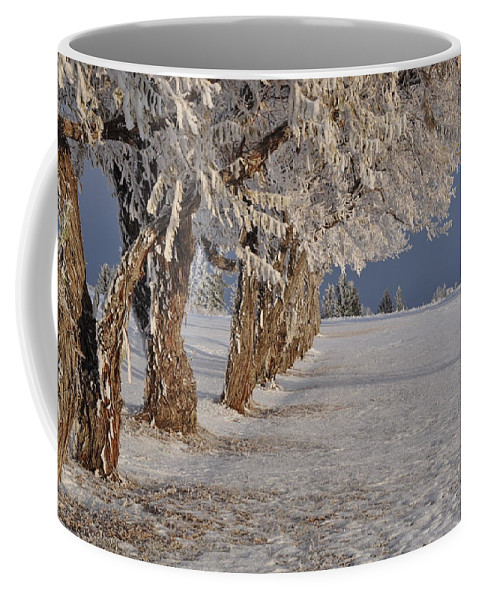 Frost Coffee Mug featuring the photograph Frosted Trees by Fran Riley