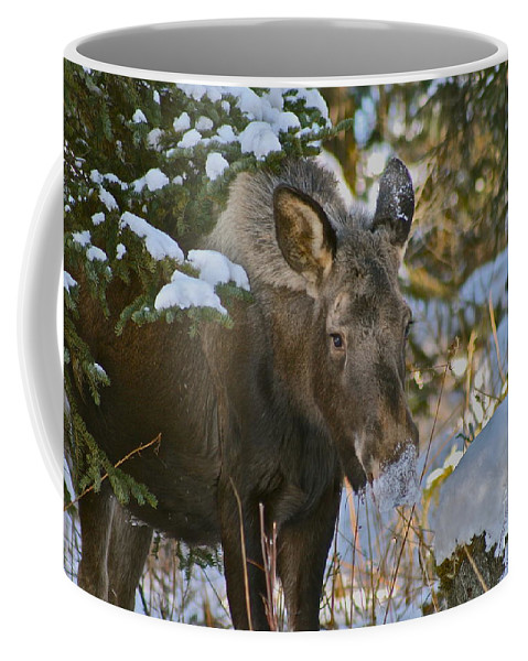 Moose Coffee Mug featuring the photograph Frosty Nose by Rick Monyahan