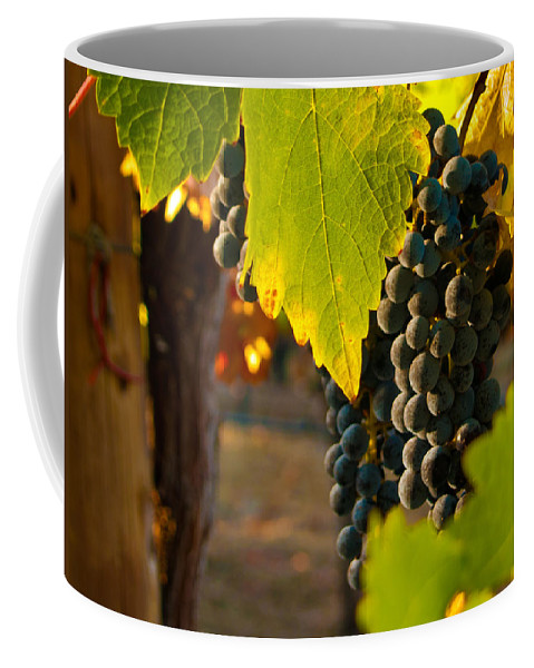 Grape Coffee Mug featuring the photograph Fruit Of The Vine by Bill Gallagher