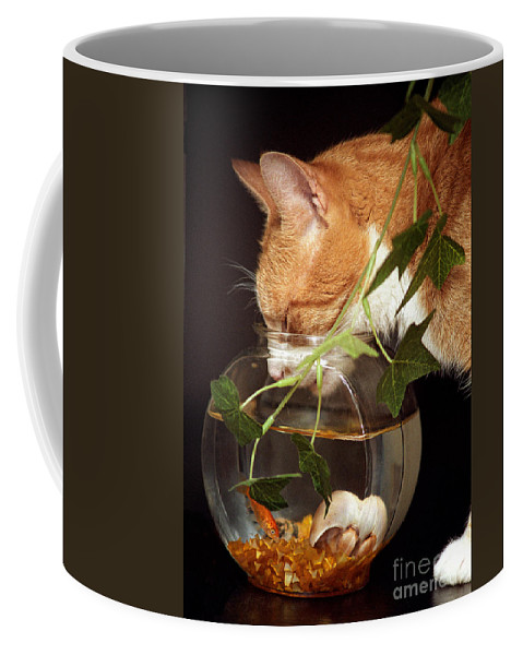 Cats Coffee Mug featuring the photograph Frustrated Feline by Geoff Crego