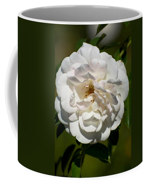 White Coffee Mug featuring the photograph Full Bloom by Michael Moriarty