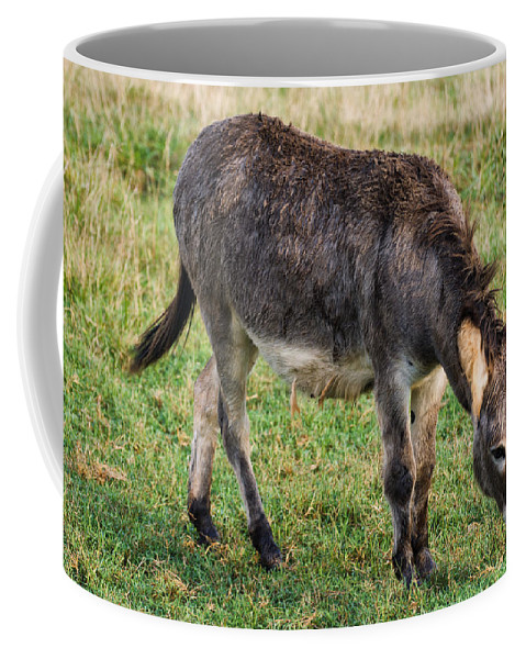 Donkey Coffee Mug featuring the photograph Full Grown Donkey Grazing by Chris Flees