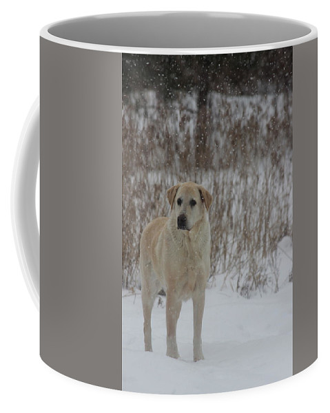 Dog Coffee Mug featuring the photograph Fun In The Snow by Tiffany Erdman