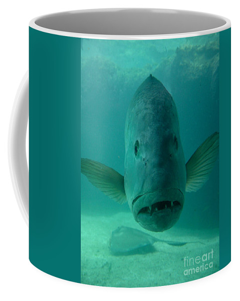 Aquarium Coffee Mug featuring the photograph Funny Fish Face by Amy Cicconi