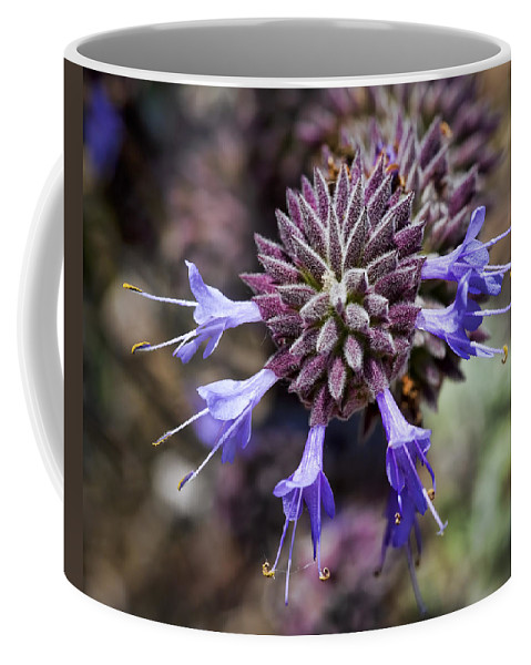 Lavender Flowers Coffee Mug featuring the photograph Fuzzy Purple 2 by Kelley King