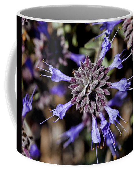 Fuzzy Coffee Mug featuring the photograph Fuzzy Purple 3 by Kelley King