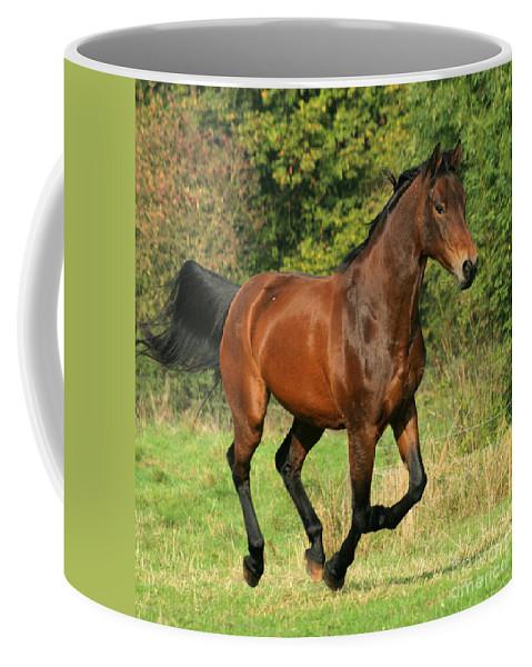 Horse Coffee Mug featuring the photograph Gallop by Angel Tarantella