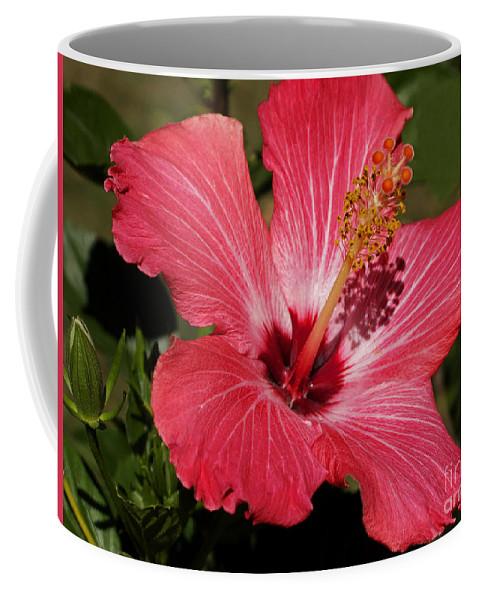 Hibiscus Coffee Mug featuring the photograph Garden Beauty by Ann Horn