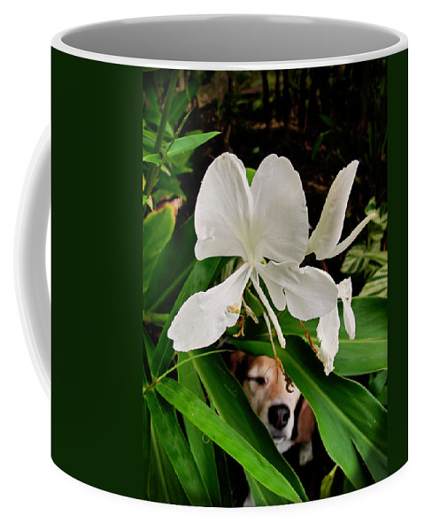 Beagle Coffee Mug featuring the photograph Garden Hound by TK Goforth
