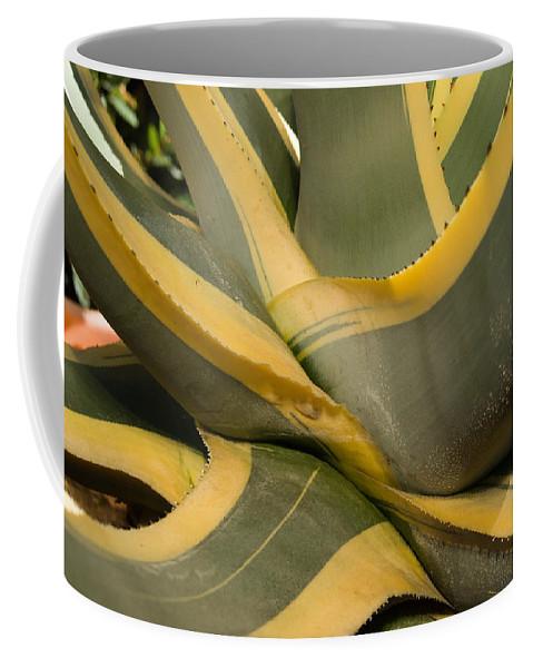 Agave Coffee Mug featuring the photograph Gave Cactus by Douglas Barnett