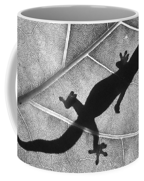 Gecko Coffee Mug featuring the photograph Gecko Shadow by Sean Davey