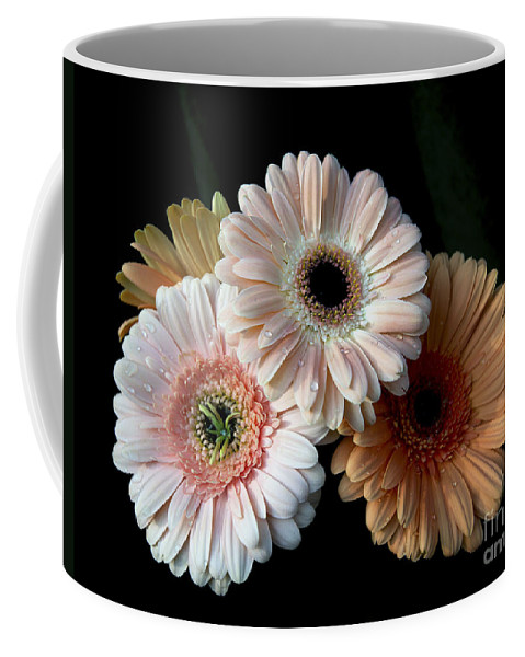 Gerbera Flower Coffee Mug featuring the photograph Gerbera Daisy  7302 by Terri Winkler