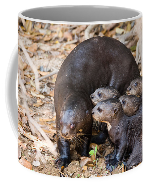 Photography Coffee Mug featuring the photograph Giant Otter Pteronura Brasiliensis by Panoramic Images