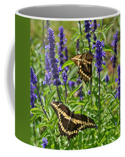 Giant Coffee Mug featuring the photograph Giant Swallowtail Butterfly Couple by Karen Adams